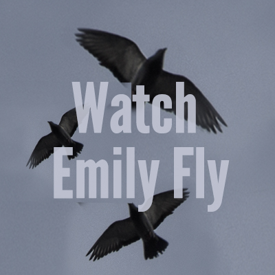 Watch Emily Fly